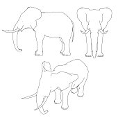Set with the outline of an elephant. Front, side, isometric view. Vector illustration.