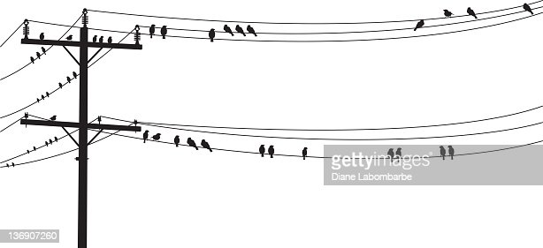Several B&W Birds Perched On A Old Telephone Wire