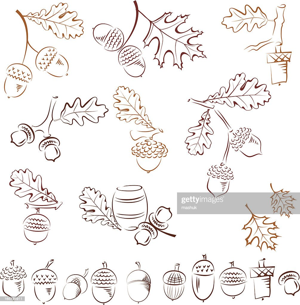 Uncategorized Drawings Of Acorns several drawings of acorns with fall leaves vector art getty images art