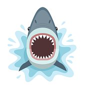 Vector illustration of shark with open mouth full of sharp teeth, isolated on white background.