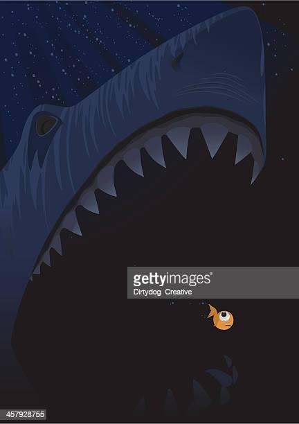 Shark & Fish