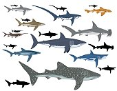 collage of different types of sharks