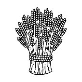 Sheaf of wheat, vector illustration