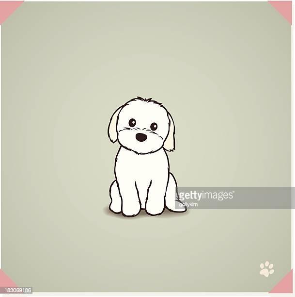 Shih Tzu Stock Illustrations And Cartoons Getty Images