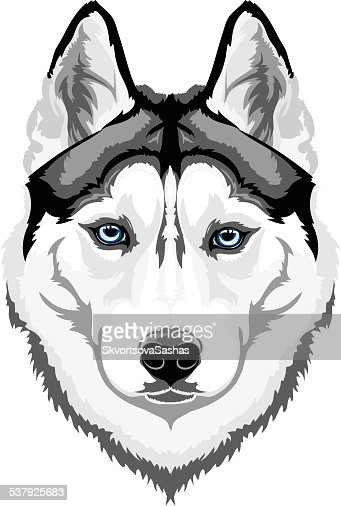 Siberian Husky : Vector Art