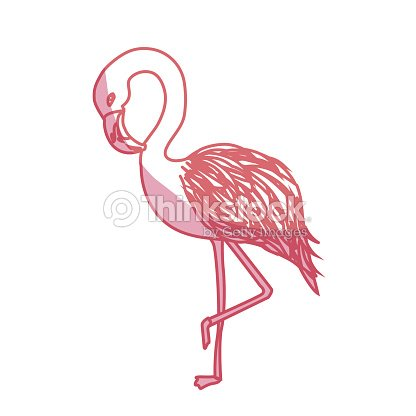 Silhouette beauty and exotic flamingo bird animal