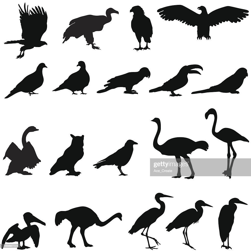 silhouette collection of birds vector art getty images