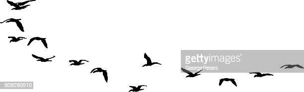 Silhouette Flock of Sea Birds Flying. Isolated on White