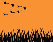 A flock of geese in formation fly over a marsh in silhouette.