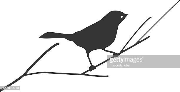 Silhouette of a bird on branch
