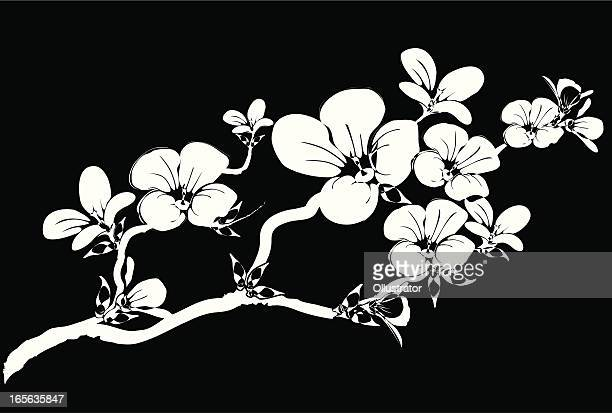 Silhouette of a branch abloom