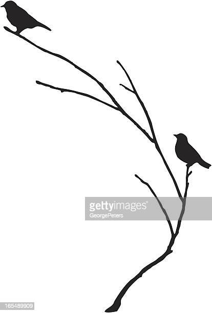 Silhouette of BlueBirds on a Branch