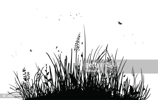 tall grass silhouette with silhouette of tall grass and bugs on white vector art of tall grass and bugs on white getty images
