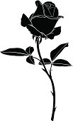 Silhouette image beautiful rose flower