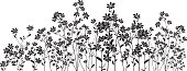 Silhouette meadow flowers on white background