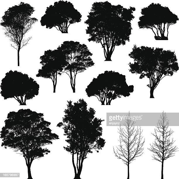 Silhouetted trees