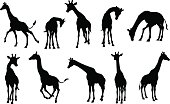 A giraffe animal silhouette set