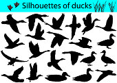Collection of silhouettes of ducks
