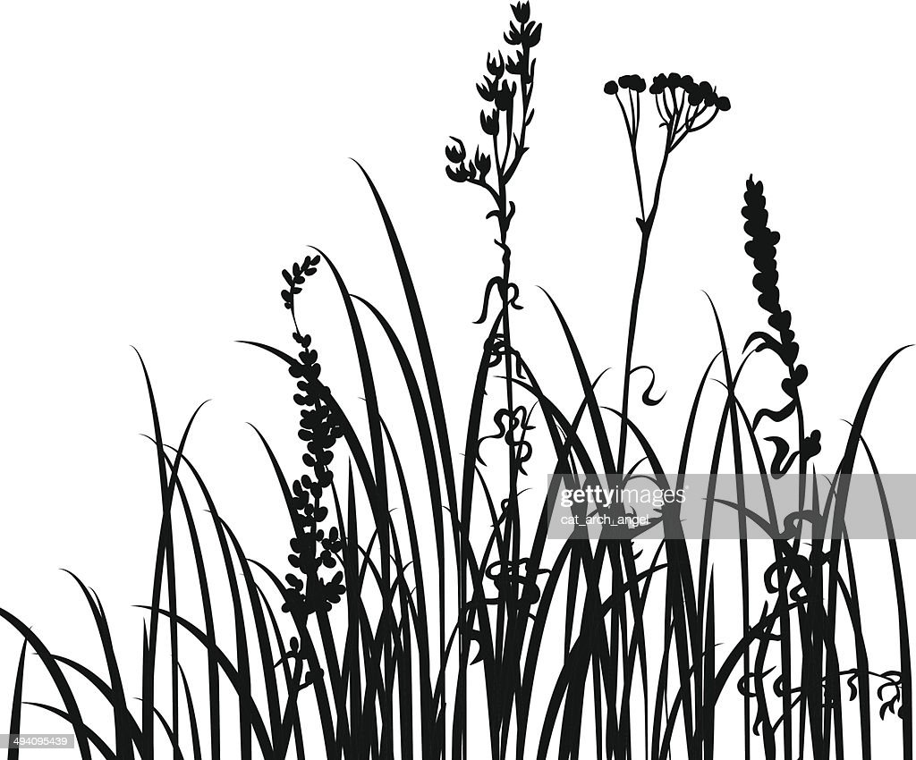 Line Drawing Grass : Silhouettes of flowers and grass vector art thinkstock