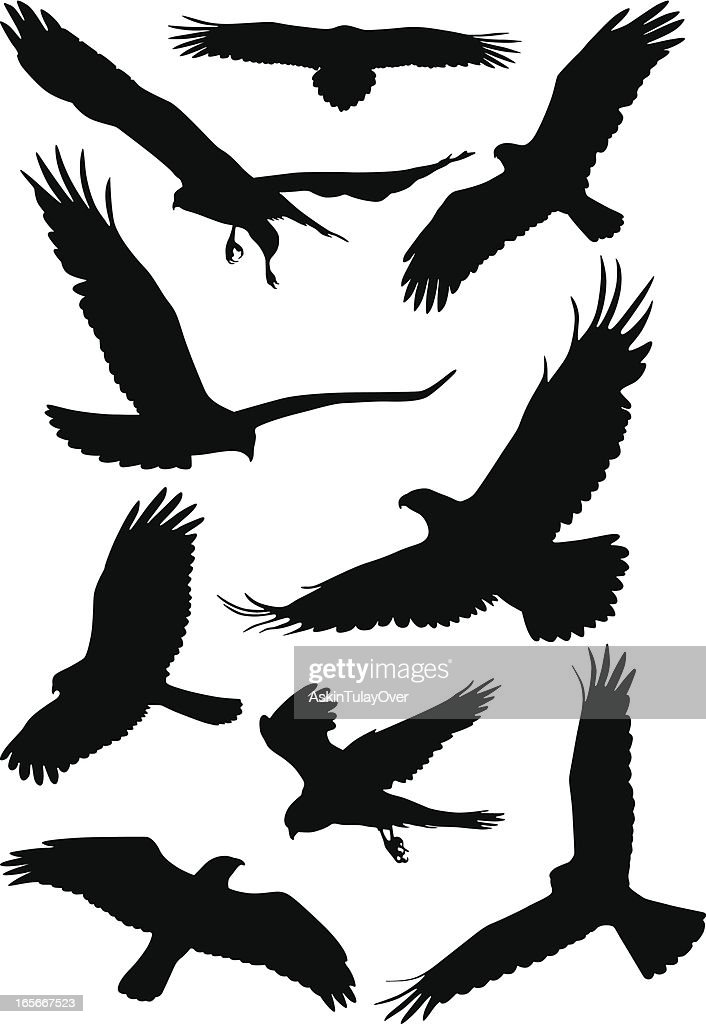 Silhouettes Of Wild Birds In Flight Vector Art | Getty Images