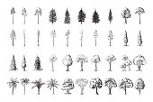Silhoutte of trees on a white background hand drawn vector illustration Sketch design.