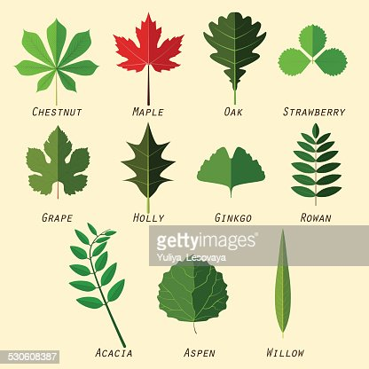 Simple Silhouettes Of Leaves With Names Of Plants Vector Art ...