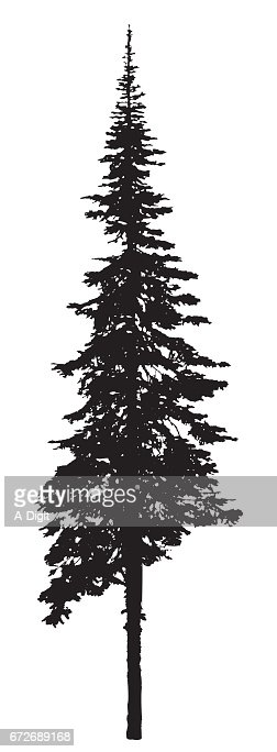 black single men in spruce pine Bark was trimmed annually and sap collected and distilled to produce turpentine and pine tar  primary leaves are single, alternate.
