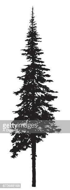 Single Pine Tree Silhouette