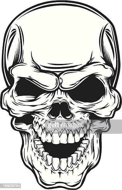 Cráneo única