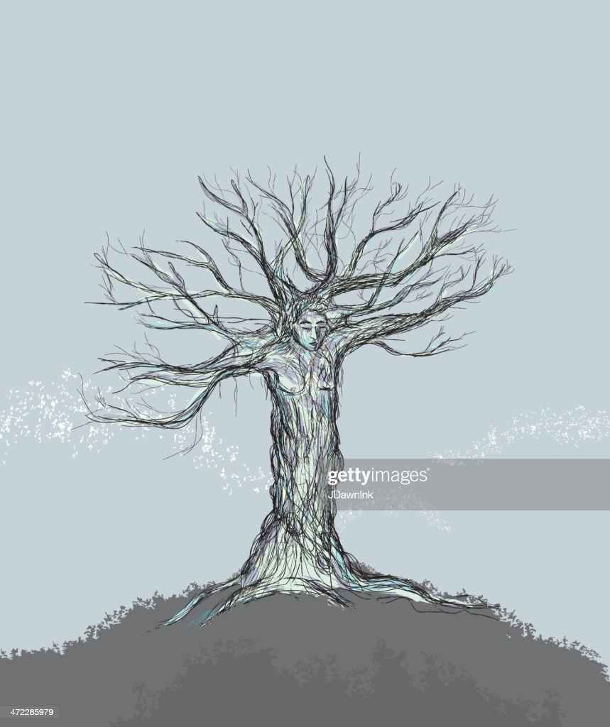<b>Single Tree</b> Stock Photos and Pictures | Getty Images
