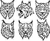 Six isolated lynx heads. Isolated on a white background