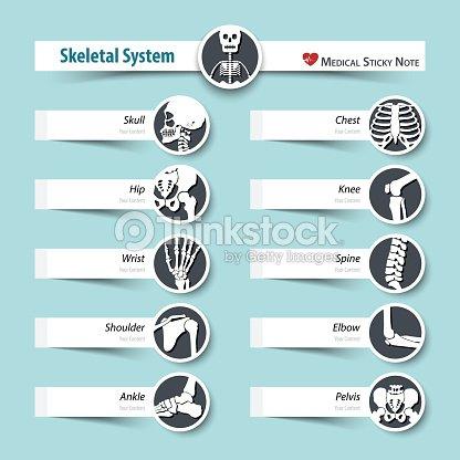 Skelettsystems Medizinische Haftnotiz Stil Flaches Design ...