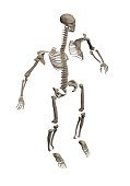 A human skeleton disassembled into bones for study. 3D. Isometry. Vector illustration.