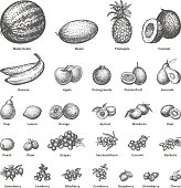 Vector illustration sketch doodle hand-drawn set fruit with an inscription. Isolated white background. Background icons for grocery shopping. Collection of juicy fruits and berries. Dietary food.