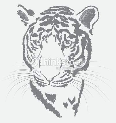 sketch of a tigers face vector art thinkstock