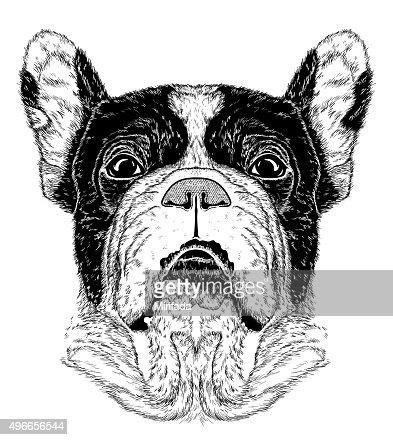 Skizze Des Porträt Der Französische Bulldogge Schwarzweiß
