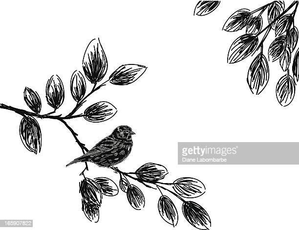 Sketchy Bird Silhouette