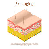 Skin Aging Card Poster Isometric View Normal and Wrinkle Epidermis for Poster and Card. Vector illustration