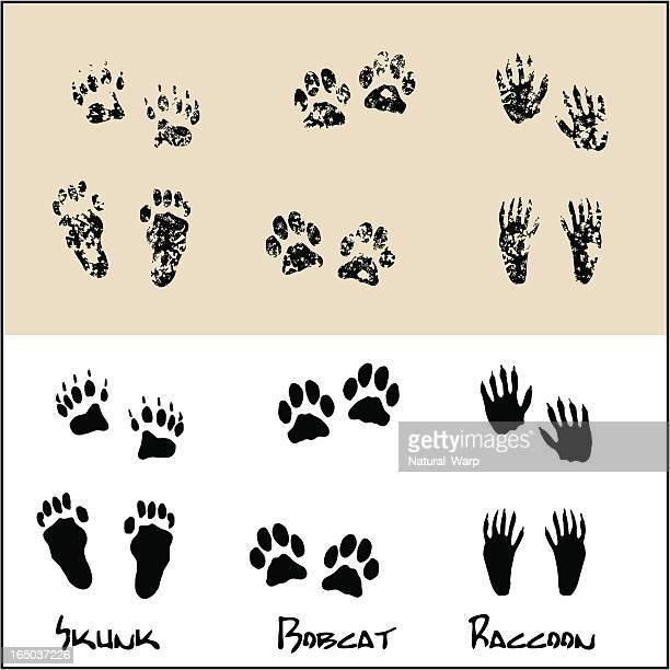 Skunk - Bobcat - Raccoon