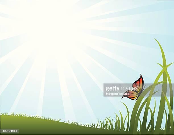 Sky, Field, et des papillons