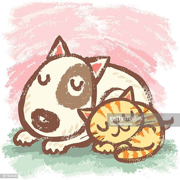 Sleeping bullterrier and cat