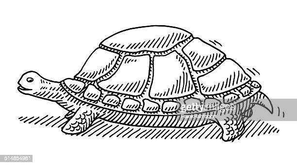 Slow Turtle Drawing