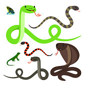 Different snakes and lizard cartoon icons set on white background. Reptiles vector illustration