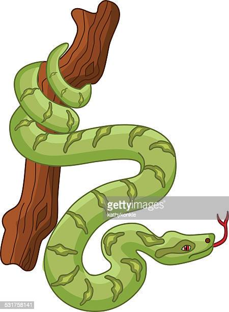 South American jungle green boa constrictor wrapped around a tree