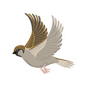 Sparrow flying bird vector illustration. Cartoon cute fauna feather flight animal silhouette. Spring freedom natural concept. Wildlife drawing isolated pet.