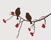 Vector image of the birds on a rowan branch.