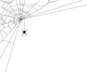 Spiderweb with Spider border element design. Clipping path used for border, more web within for any edge/border.