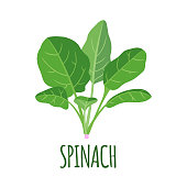 Spinach icon in flat style isolated on white background. Organic food. Vector illustration.