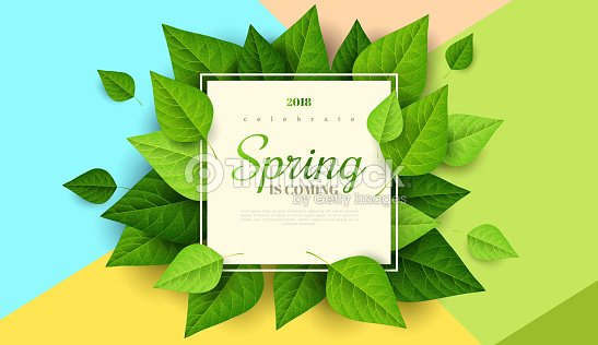 Spring background with green leaves : stock vector
