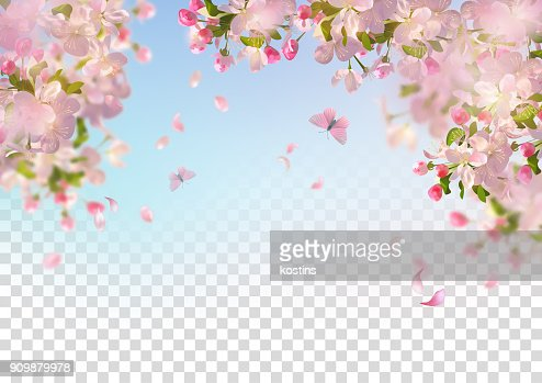 Spring Cherry Blossom : Vector Art